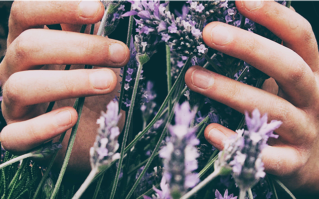 home-grown-lavender.png