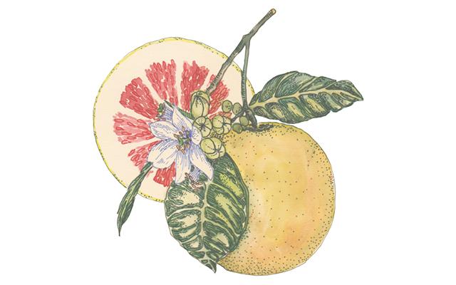 citric-pomelo-botanical.jpg