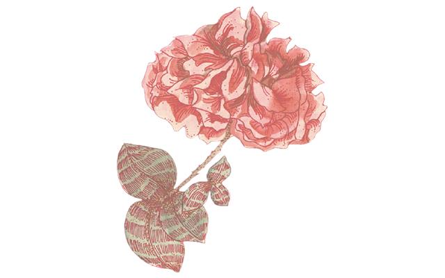 damask rose botanical.jpg