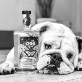 craft+gin+dog+4.jpg