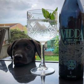 craft+gin+dog+dexter.jpg