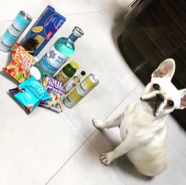 lola+dog+day.jpg