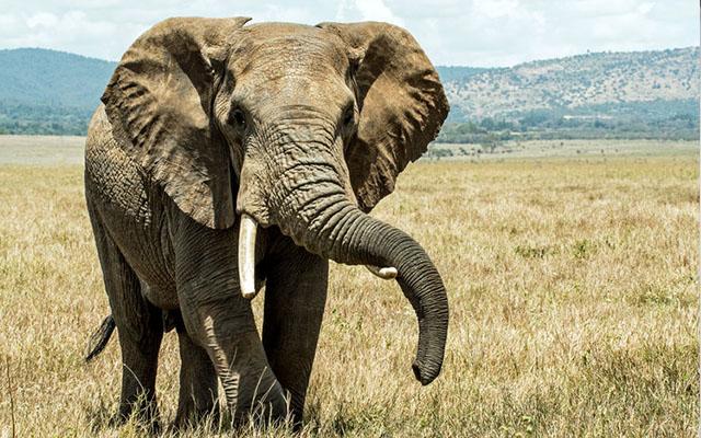 ELEPHANT POOP GIN.jpg