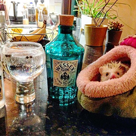 Look out - a dragon! The cutest dragon we ever did see protecting Bethany's bottle of Wessex Gin!