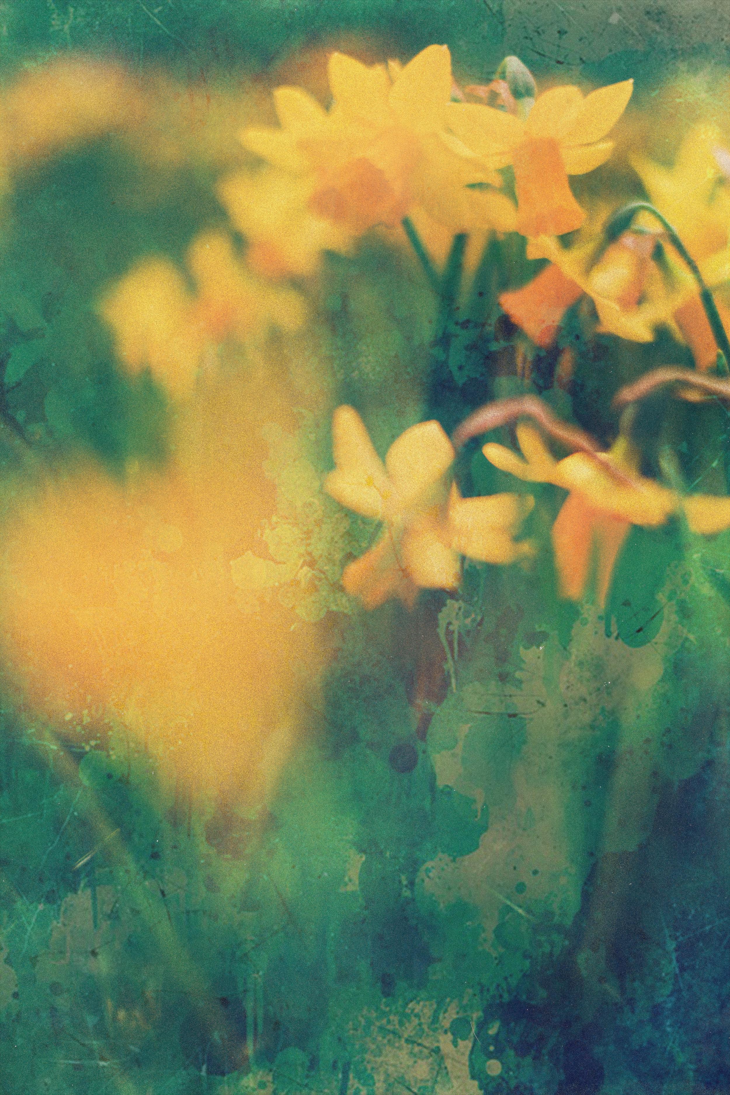 3.3.2019 flowers (1).jpg