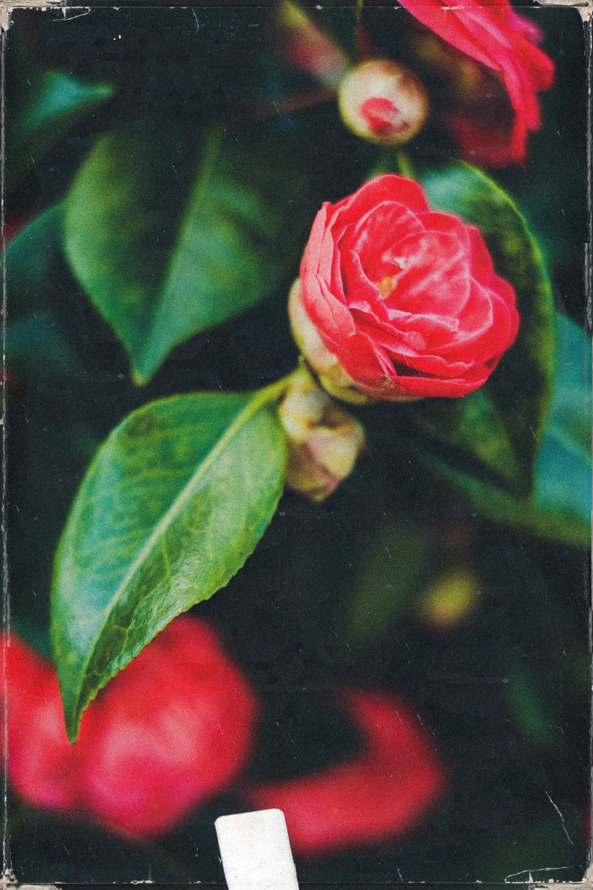 3.3.2019 flowers (4).jpg