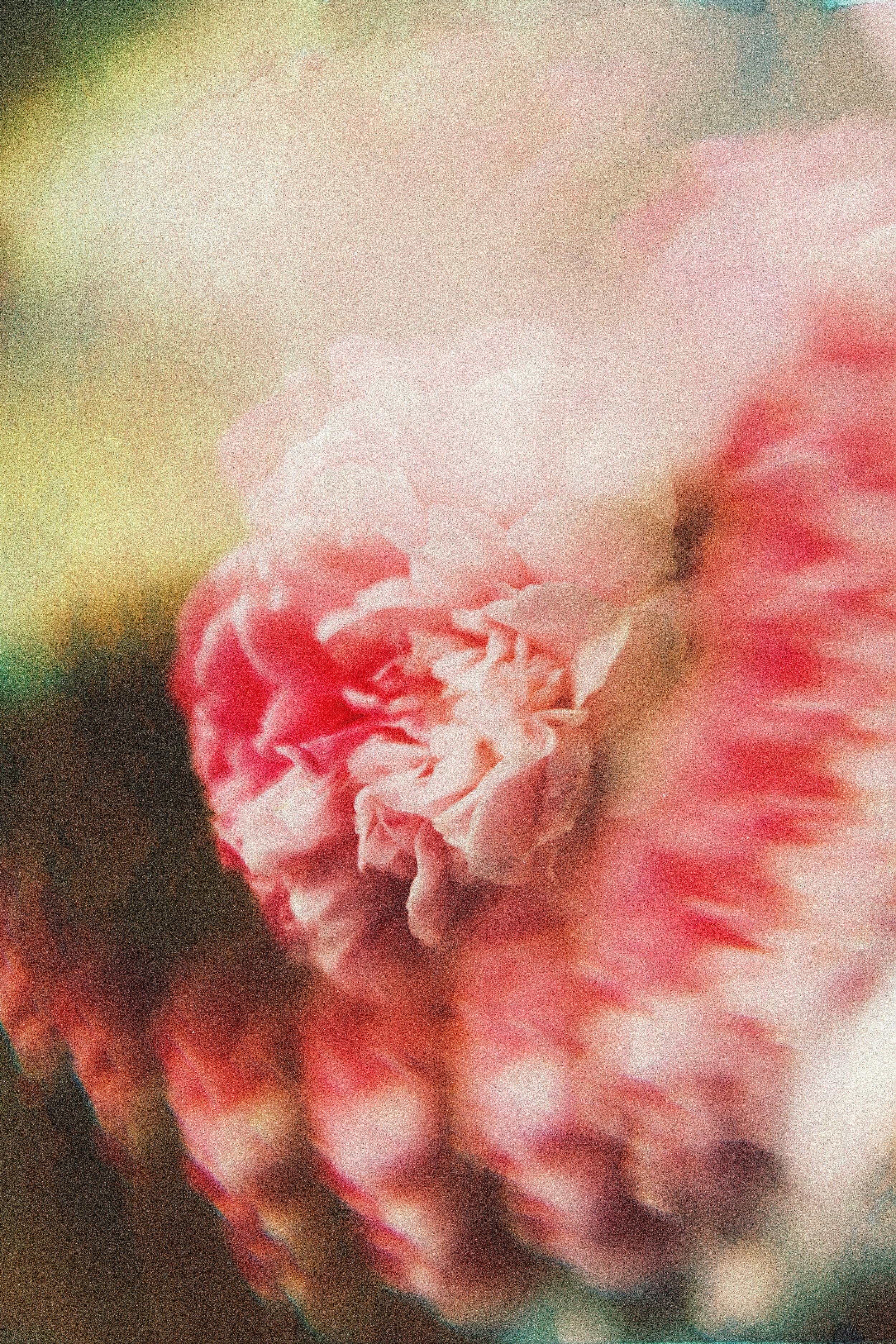 3.3.2019 flowers (7).jpg