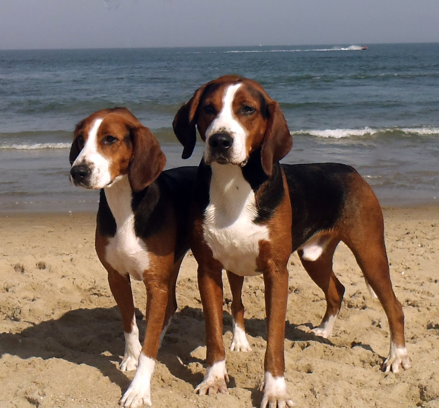 Alice and Rolo enjoying a day at the beach.