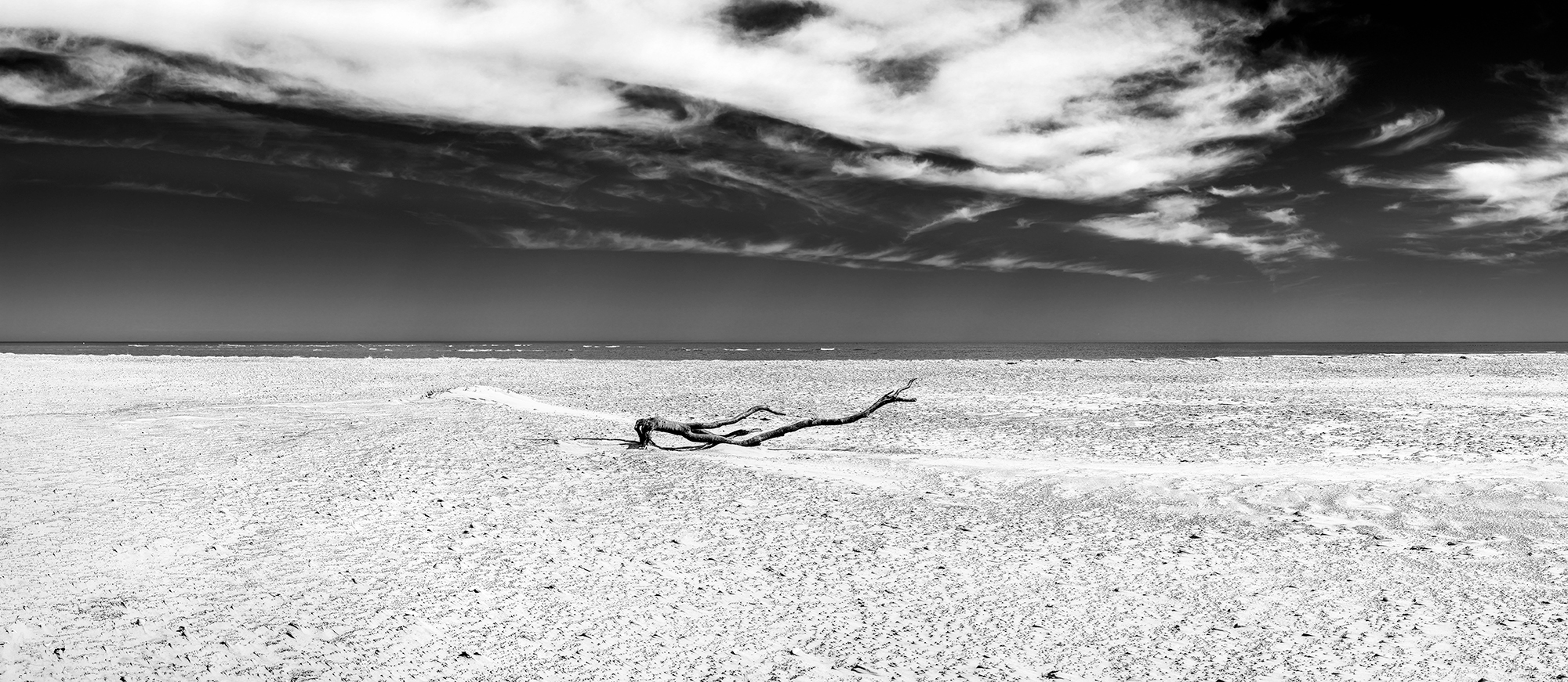 upon sand oregon inlet dead tree