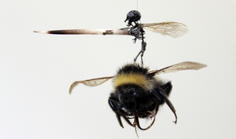 Tessa-Farmer-The-Hunt-bee-detail-ON-754x445.jpg