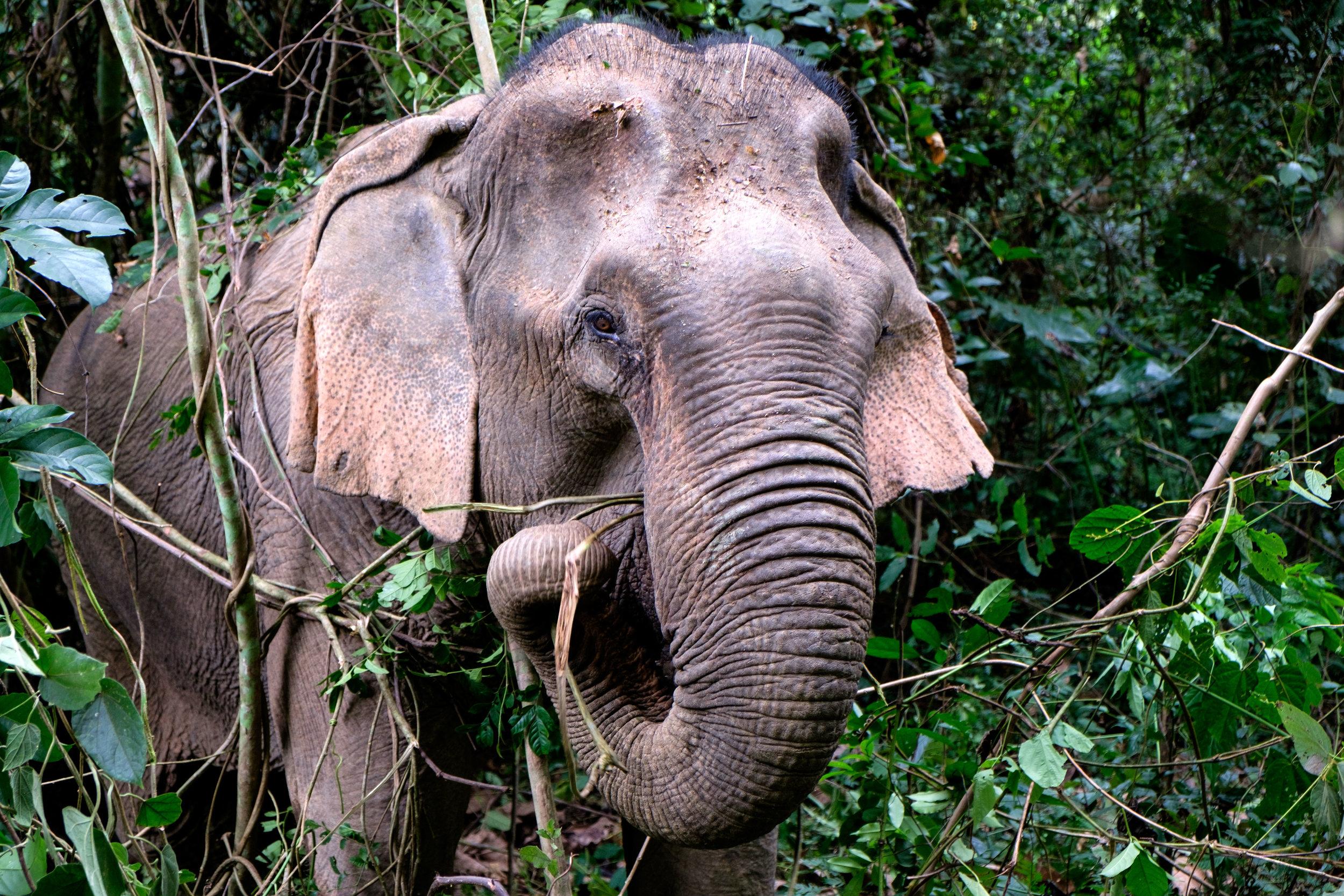 éléphant en forêt