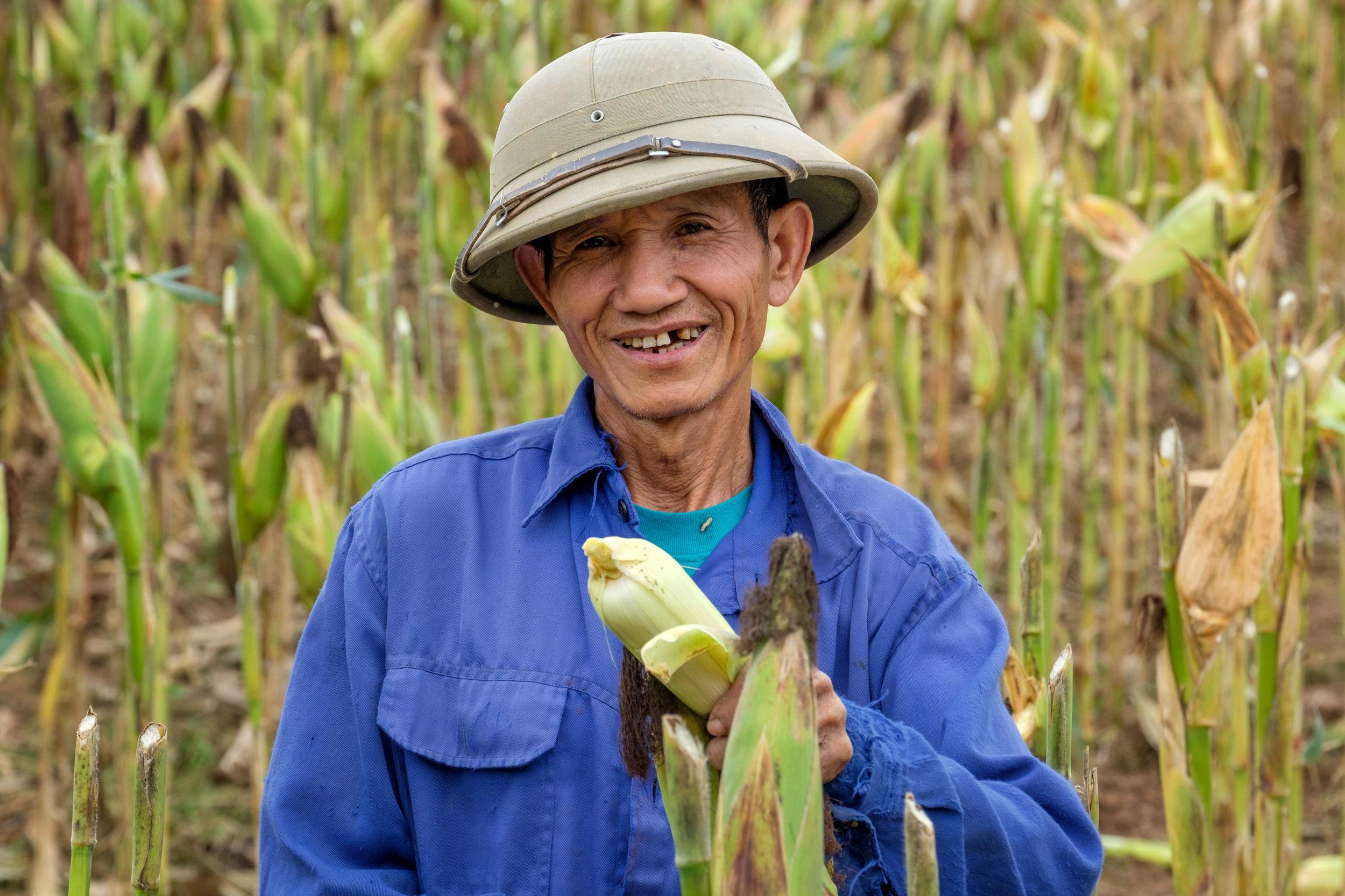 Les travailleurs aux champs sont nombreux dans la campagne vietnamienne.