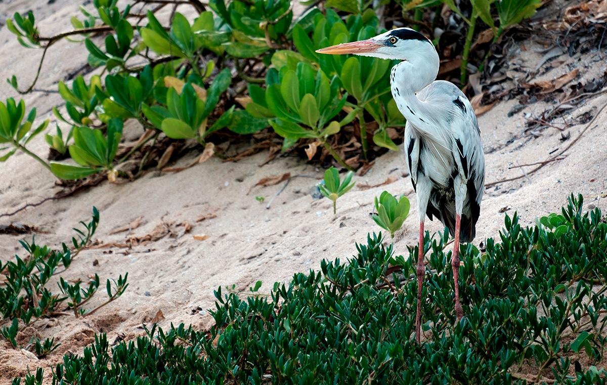 Un oiseau de type pas mal gros (p.-s. je suis un bon ornithologue).
