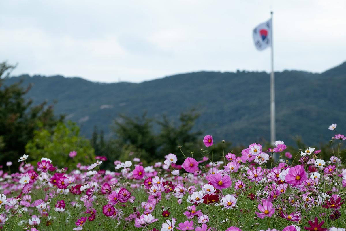18-10-01---Fleurs-et-drapeau-(Sud-de-Séoul,-Corée-du-Sud).jpg