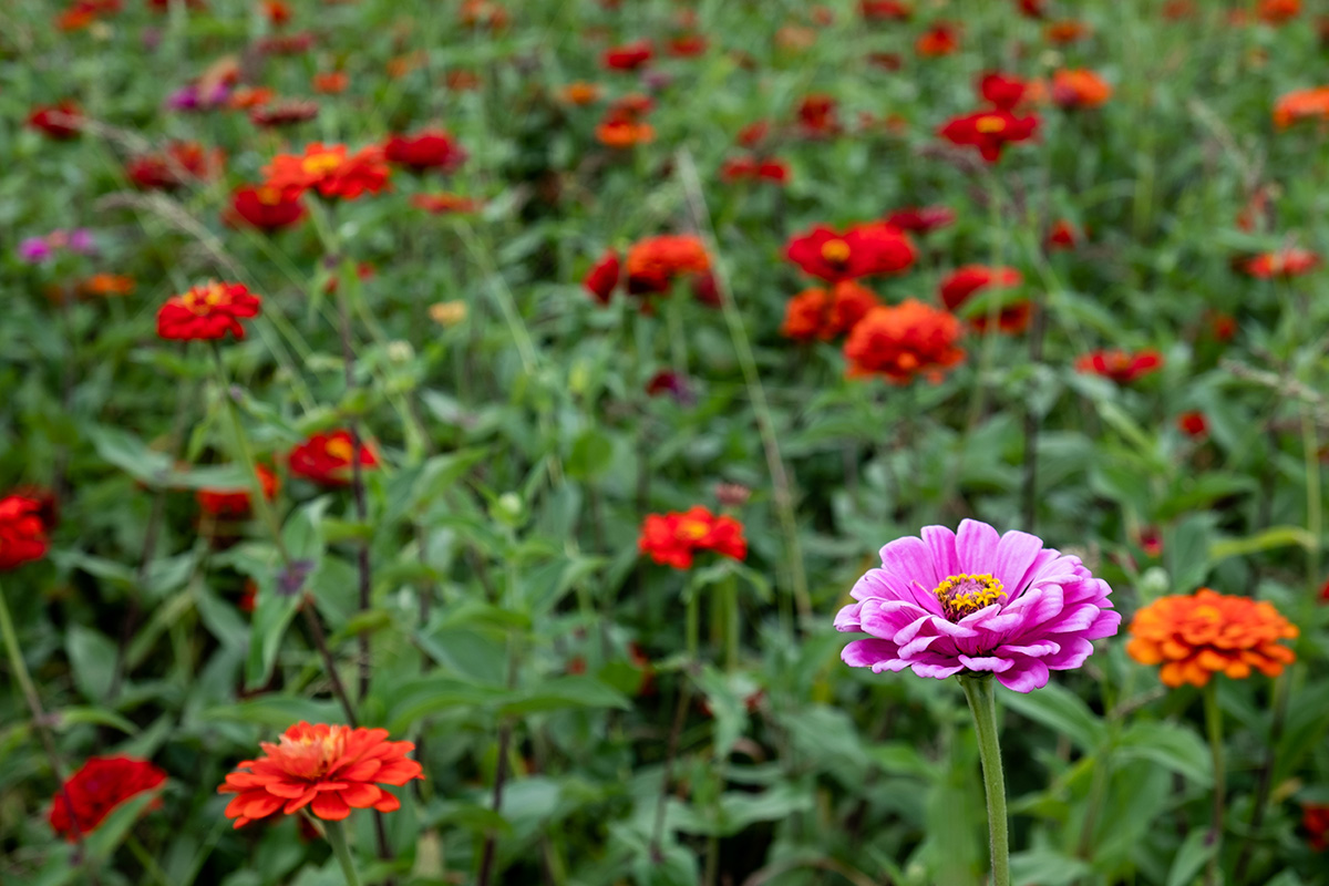 18-10-01---Fleurs-(Corée-du-Sud).jpg