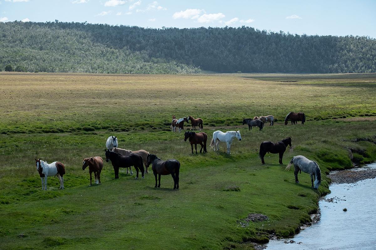 Un joli troupeau de chevaux en bordure du chemin.