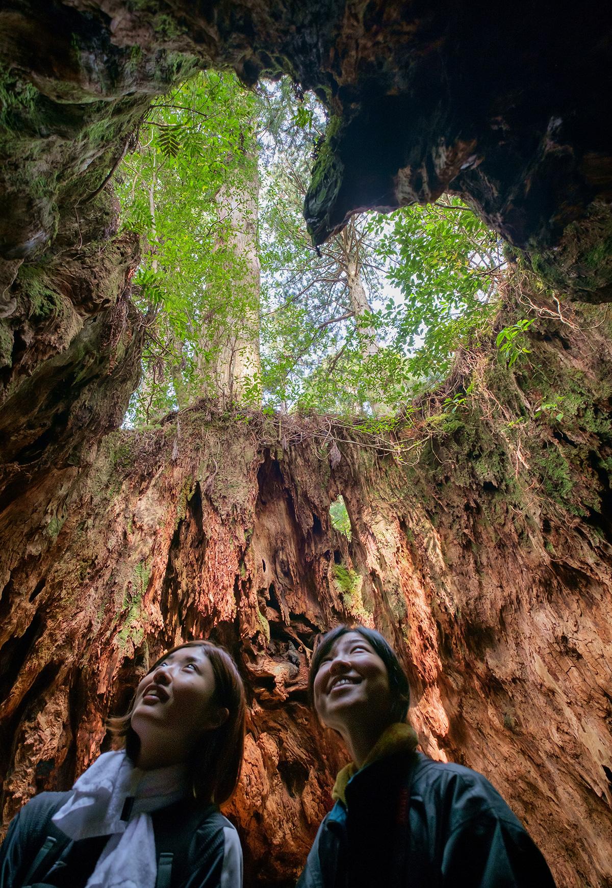 Deux amies japonaises se tiennent à l'intérieur d'un vieil arbre creux. L'ouverture du tronc en forme de cœur souligne leur amitié.