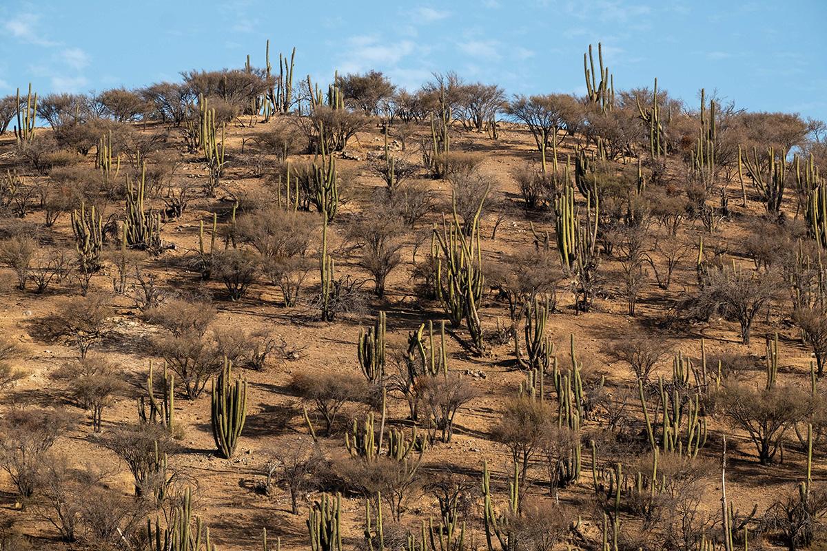 La verdure disparaît bien vite après Santiago. Le sable et la sécheresse longent les routes.