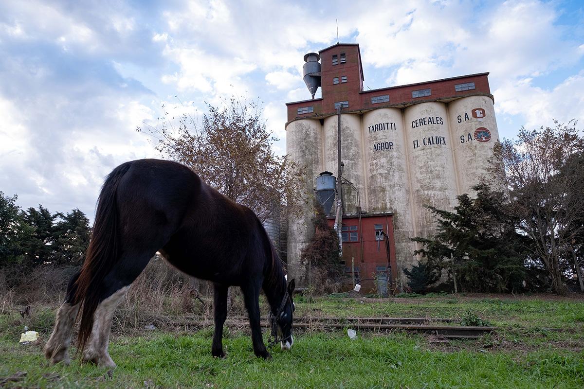 Paysage familier de chaque village : des silos à grains et quelques chevaux.
