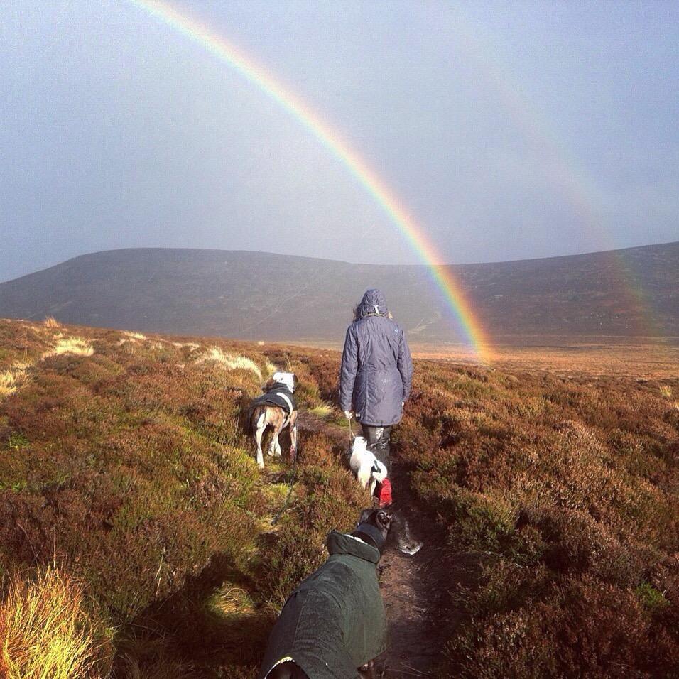 Rainbow Dogs