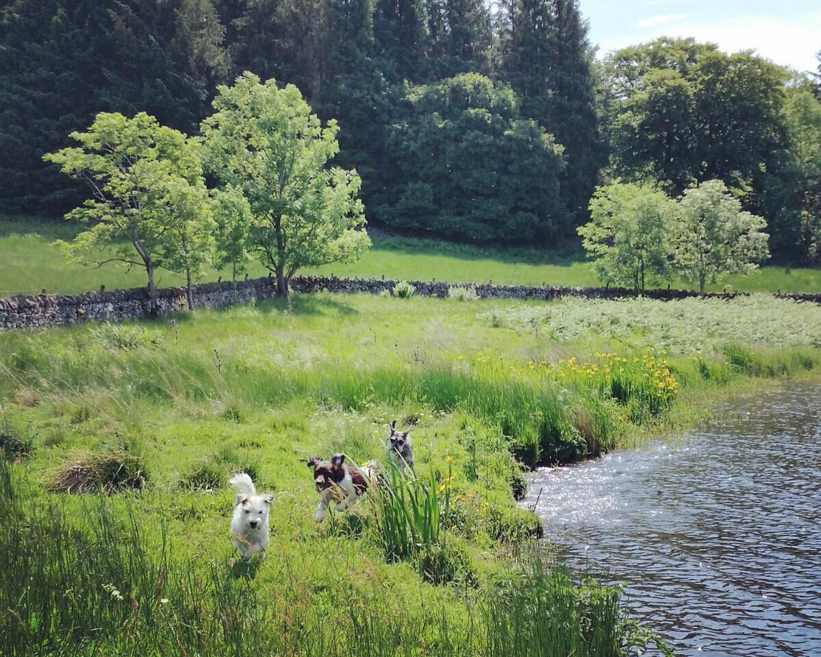 off leash dog walking edinburgh