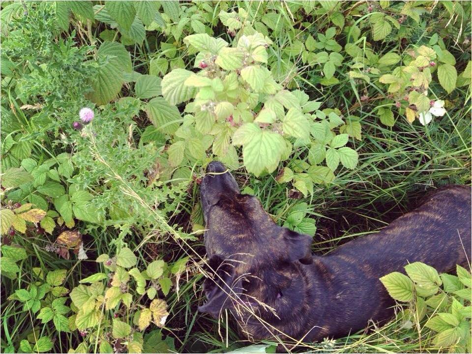Ida Picking Raspberries