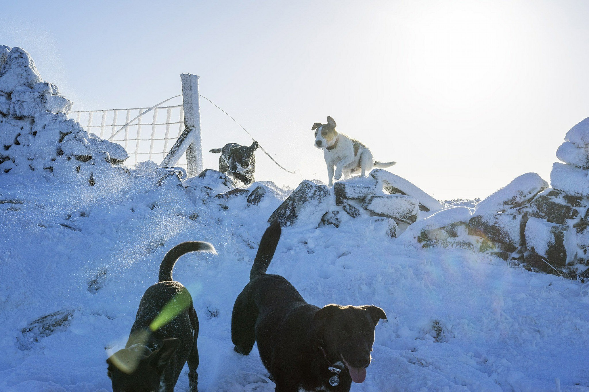 Adventure Dogs in Snow