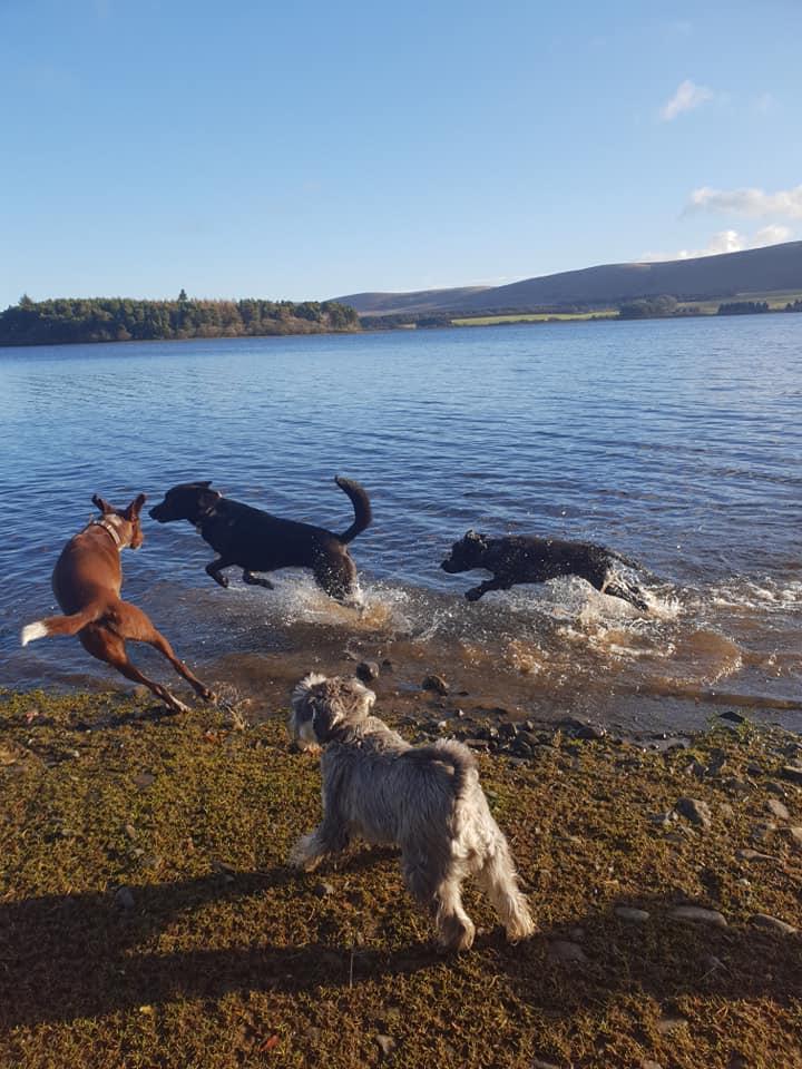 Water Dog Play