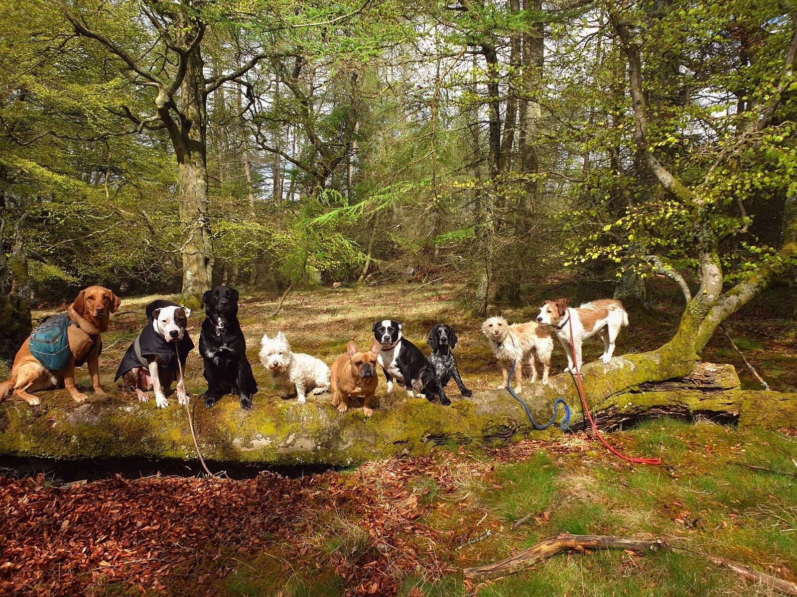 Dogs on a Log