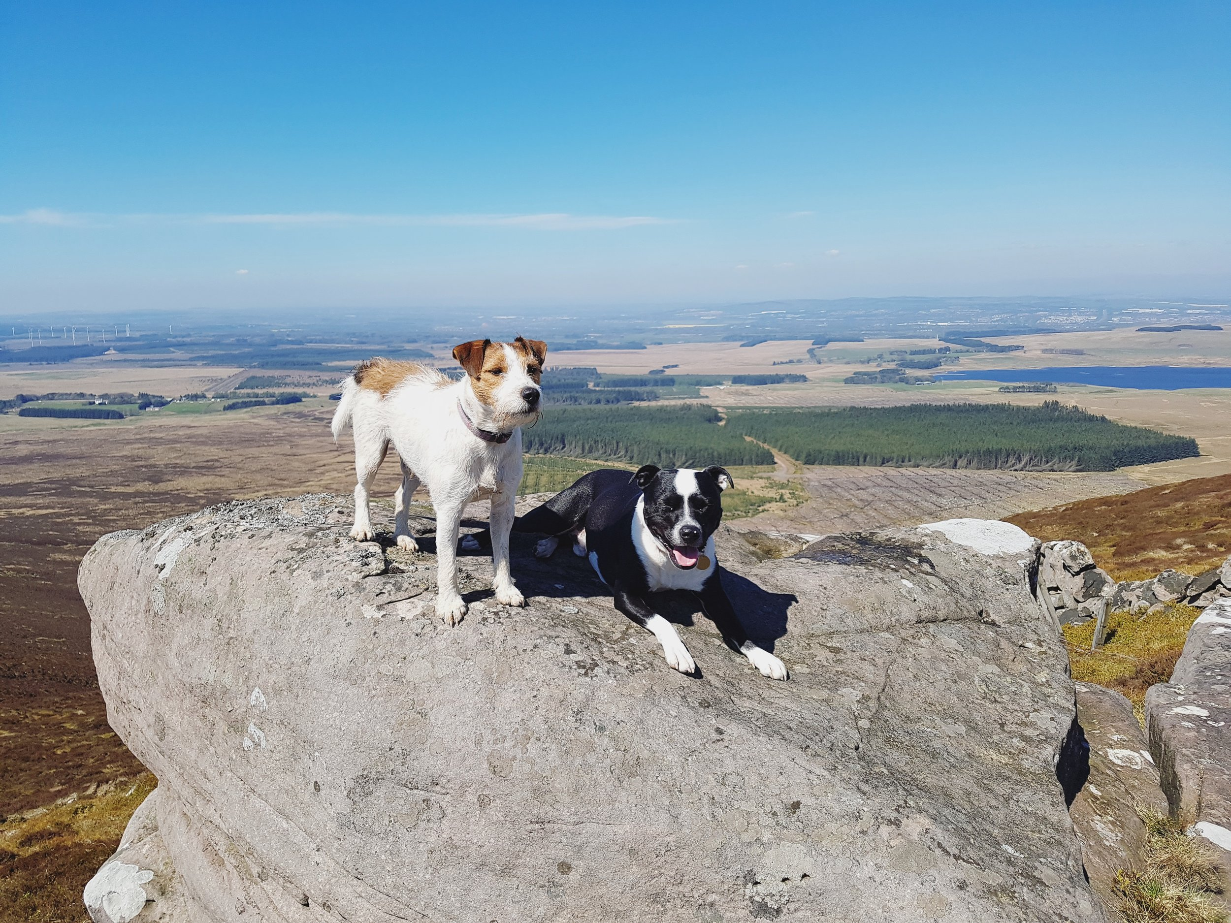 Doggie Day Trips - We want every day to be your dog's best day ever! We travel outside of the city and spend the day walking in the countryside to provide off leash socialisation at its best, all while working on good manners and participating in fun activities.