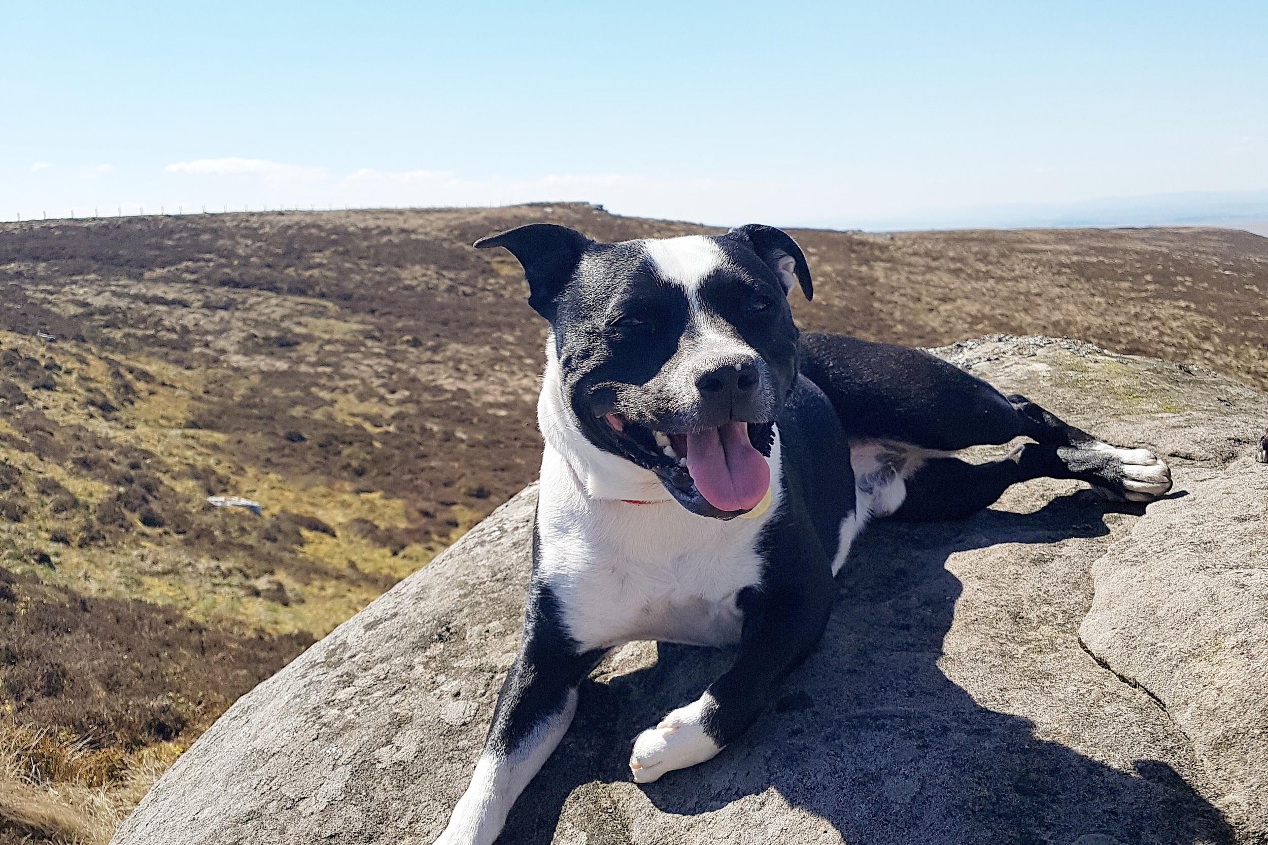 Rescue+Dog+Training+Edinburgh