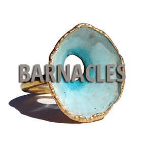 Barbnacle-HOME.jpg