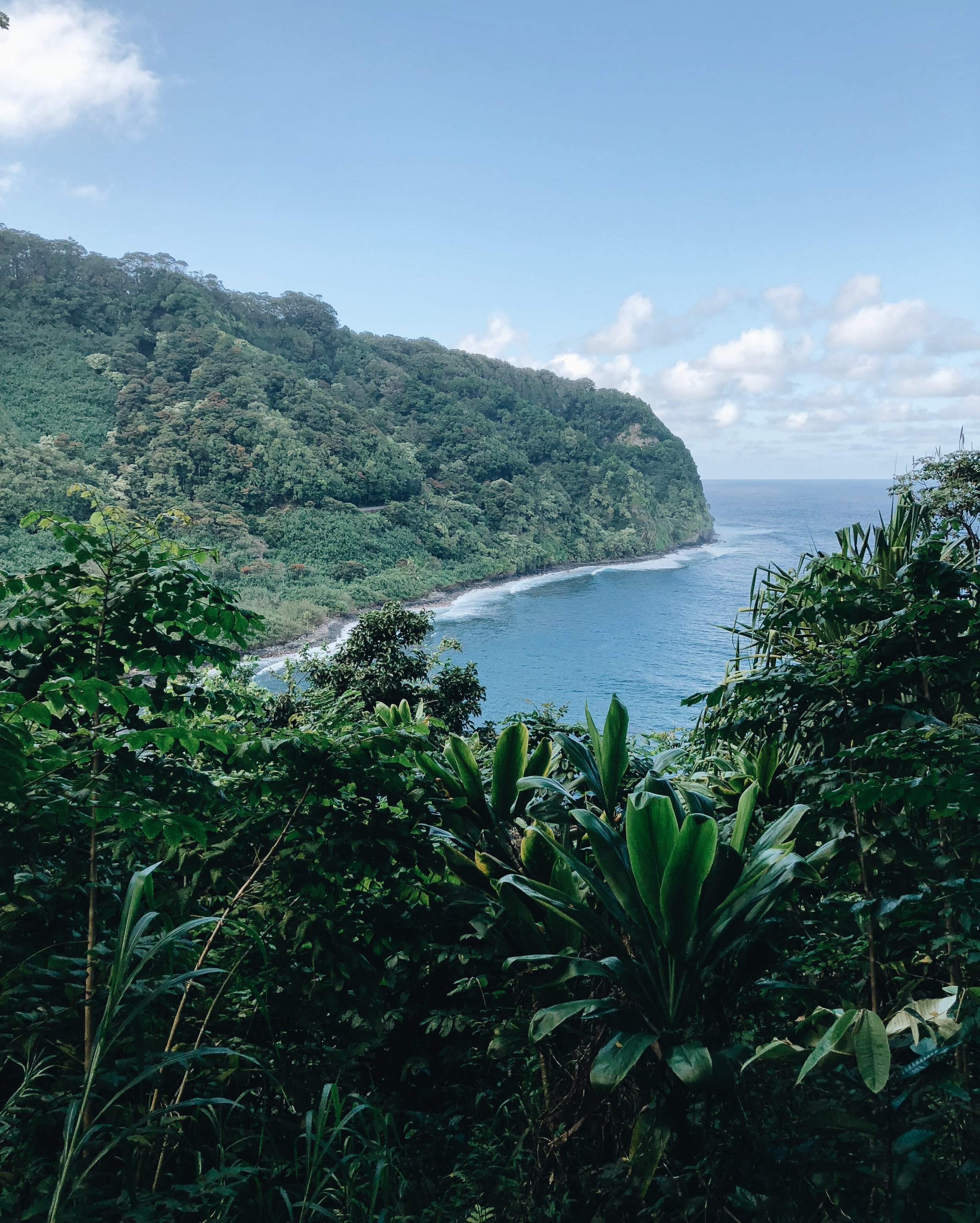 Taken on our drive on the Road to Hana. From the moment I landed I was obsessed with the fact that Jurassic Park was filmed on Maui. This picture is totally giving Jurassic Park vibes!