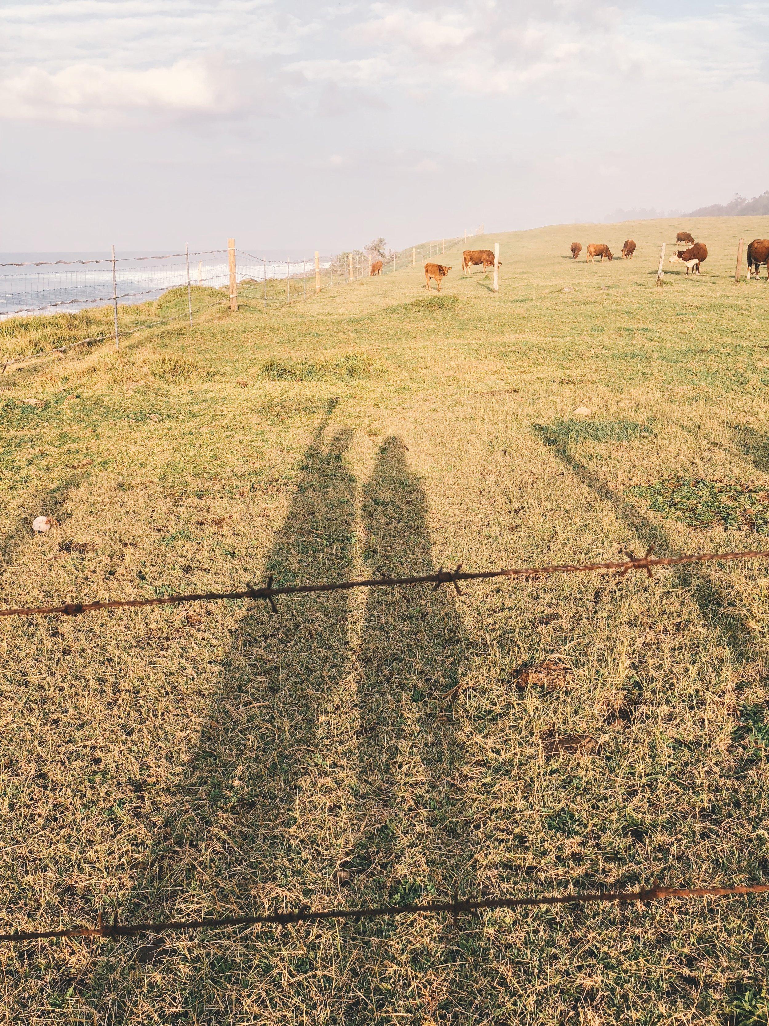 Farm by Beach