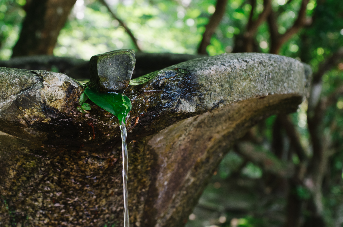 Honen-in. Stone and leaf spout