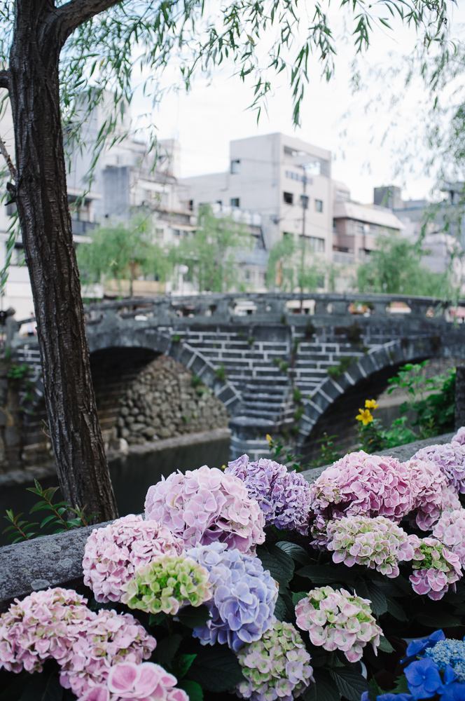 Hydrangeas on show along the canal in Nagasaki.