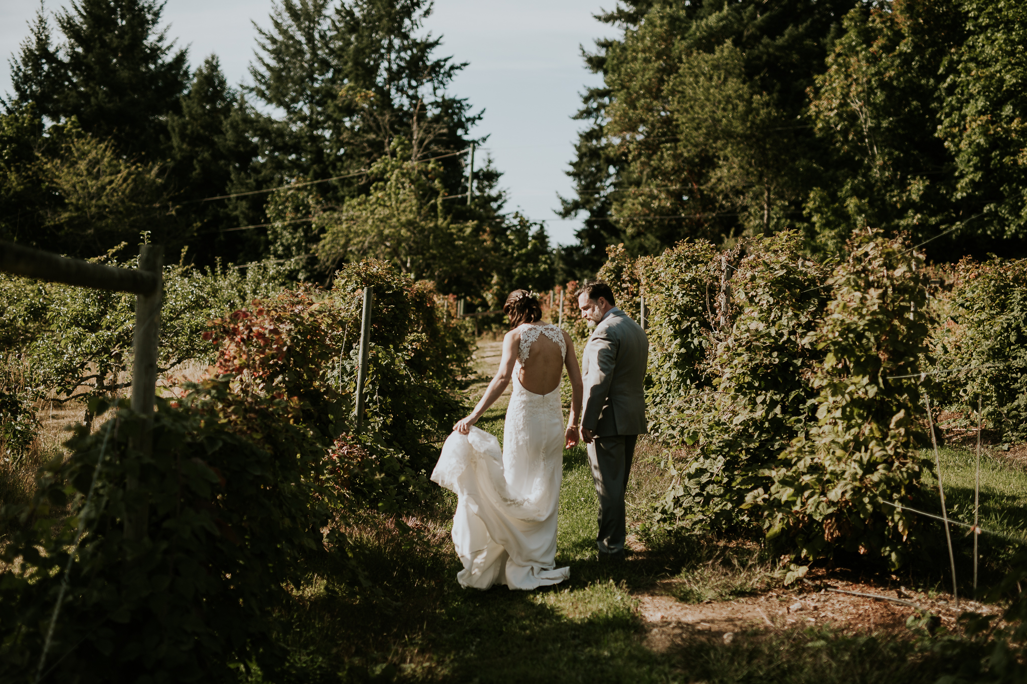 Bride and groom walking among vineyard near Victoria BC