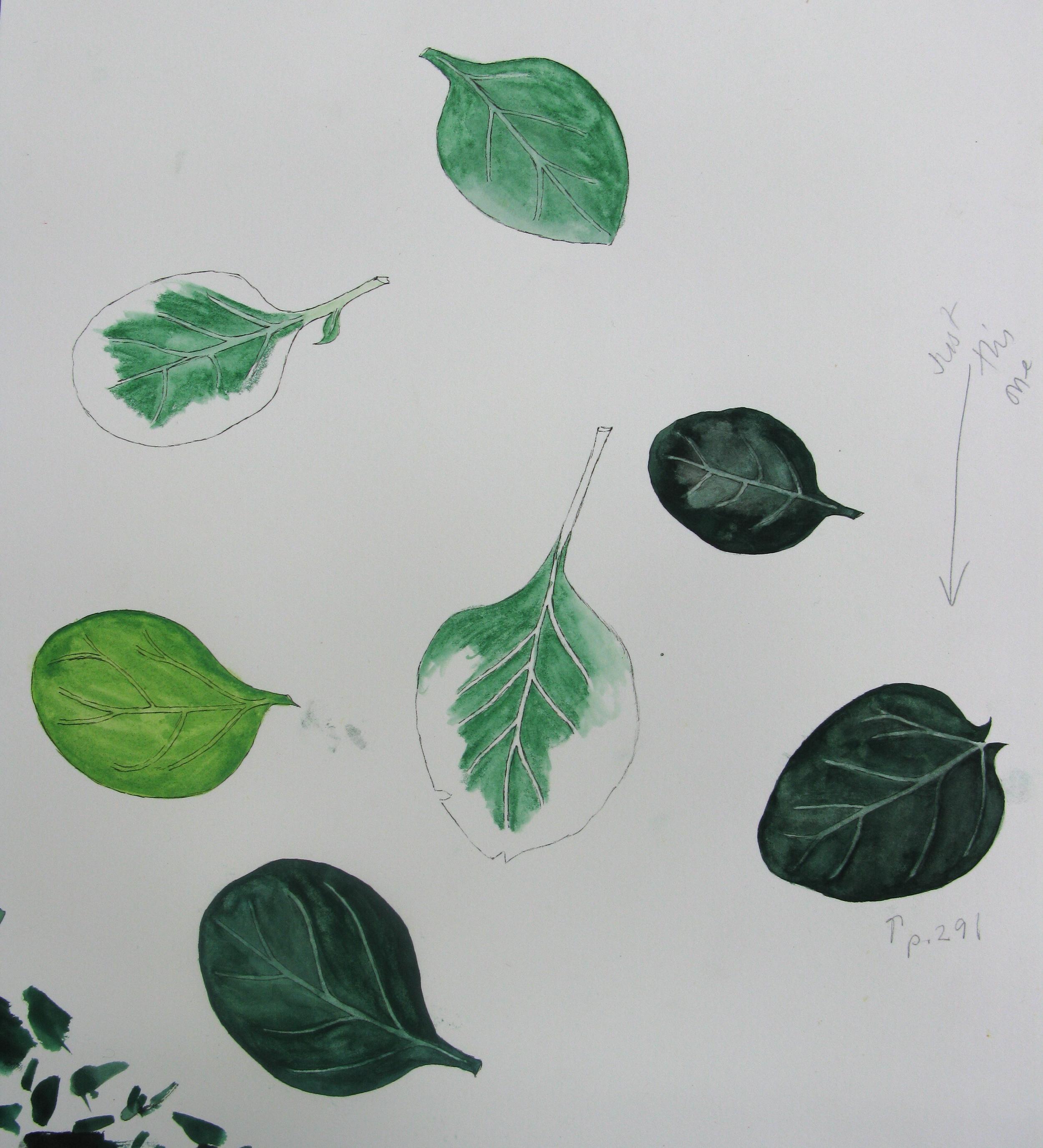 Mollie's Spinach Leaf Illustration