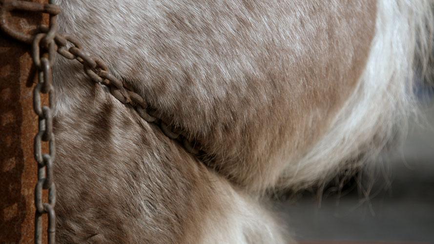 Vaderland-Paard.jpg