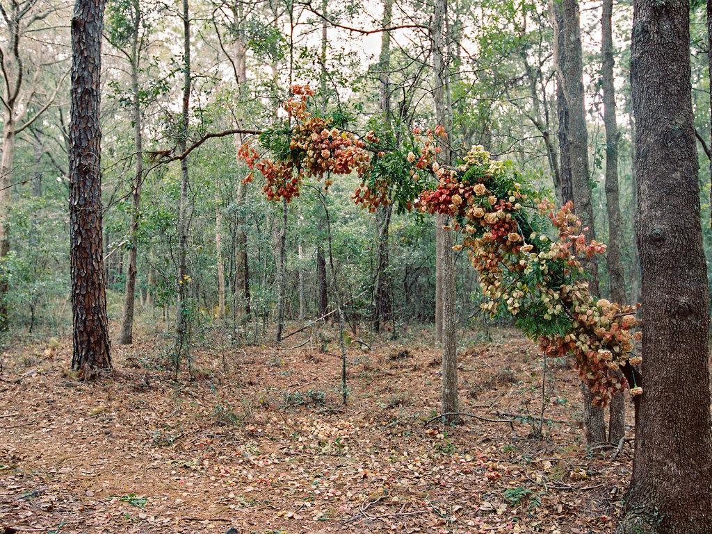 jacksonville-wedding-photographer-forest-elopement-25.jpg