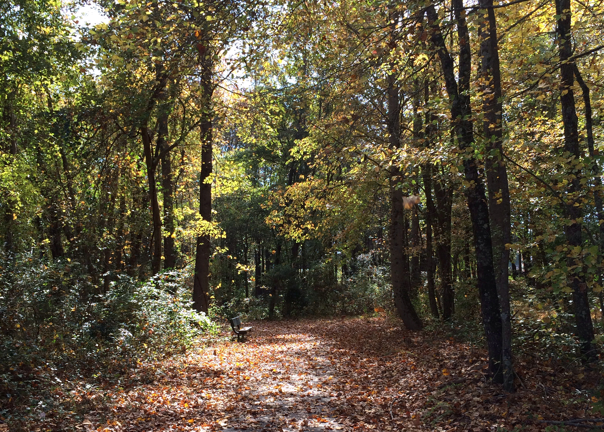 Fall Walking Trail 1.JPG