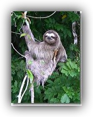 image of Sloth-2.jpg