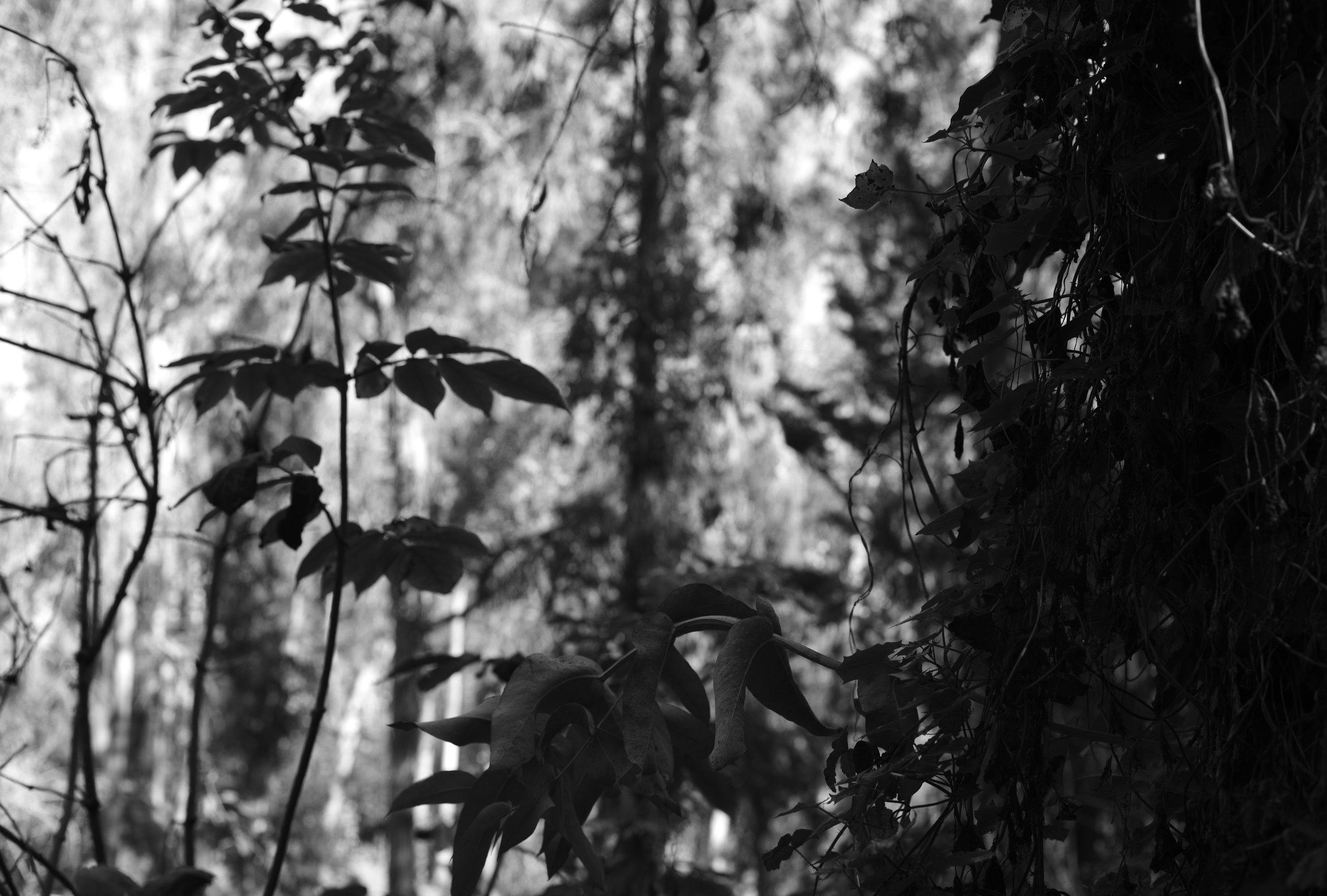 20171009_SUTRO_FOREST057.JPG