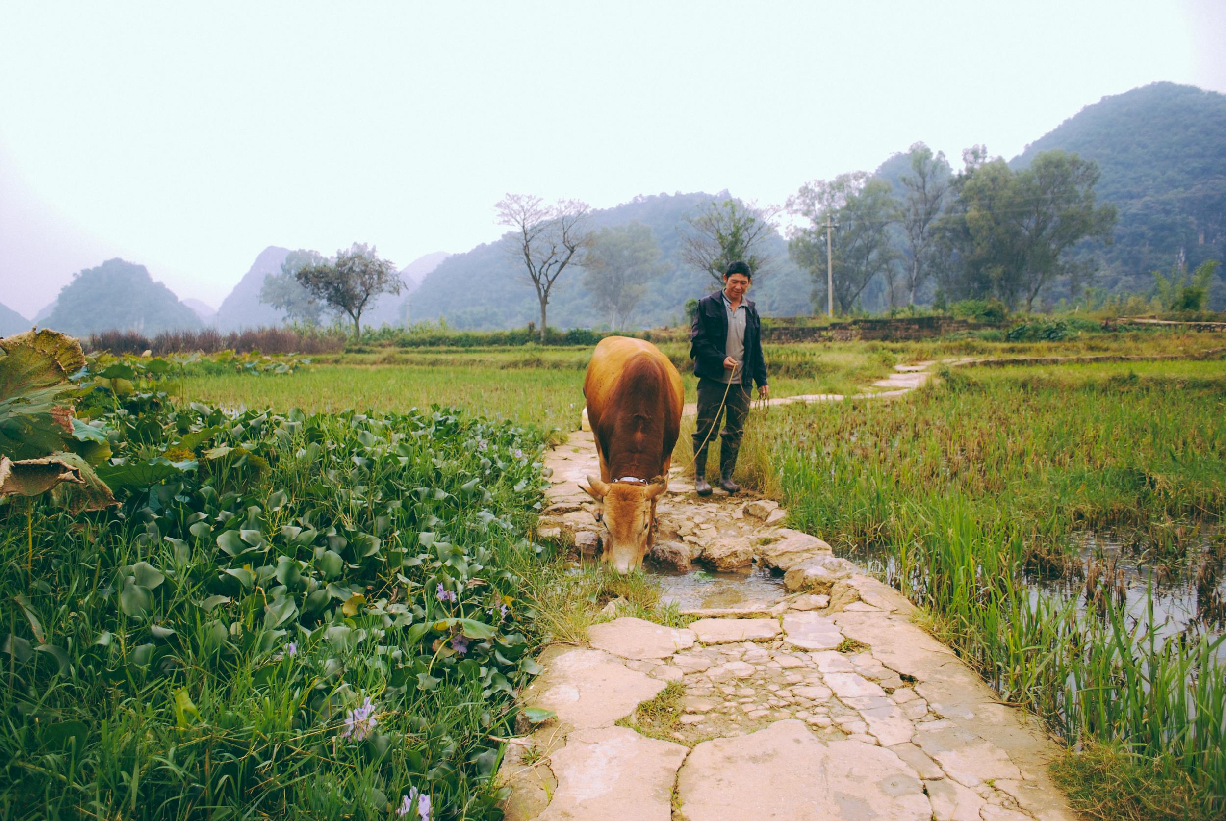 Yunnan Batch A-12.jpg