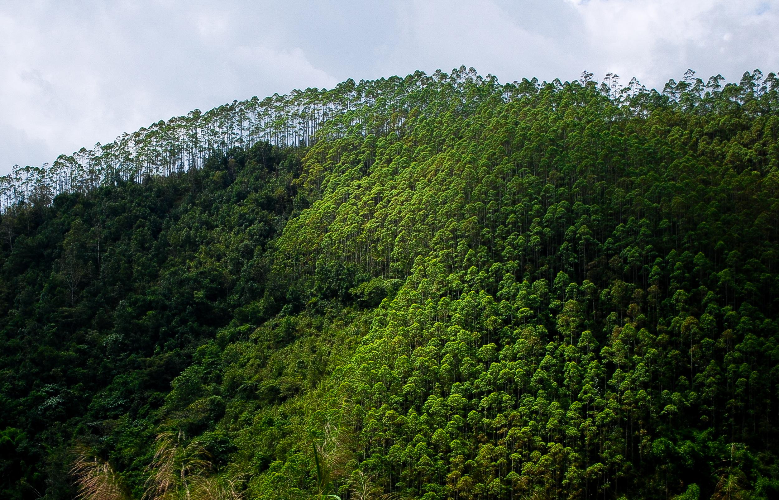 Yunnan Batch C-6.jpg