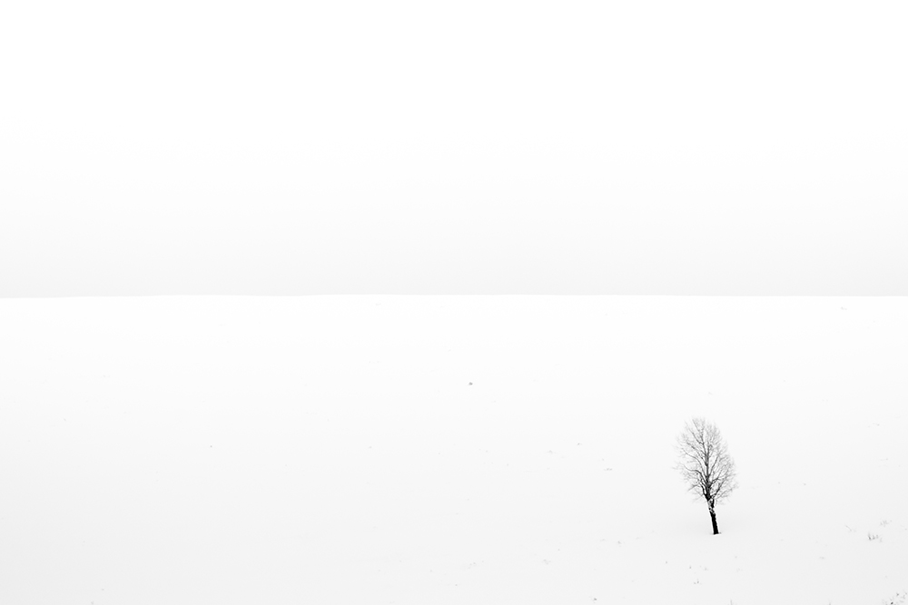 Tree in Snow 010917c copy.jpg
