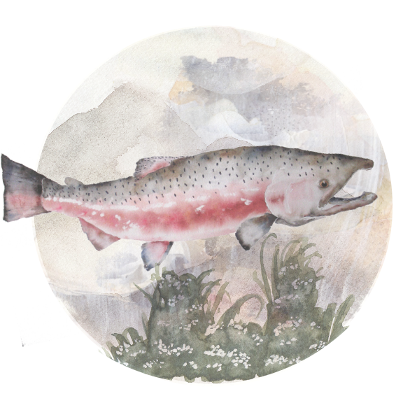 For-The-Wild-Research_Salmon_2017.png