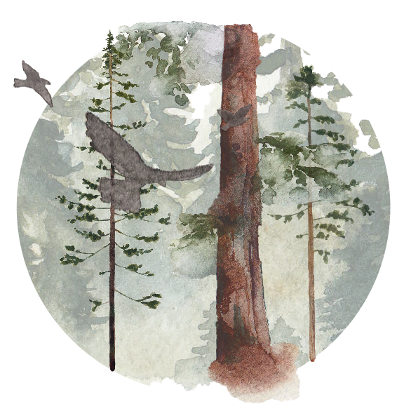 For-The-Wild-Research_Redwoods_2017.png