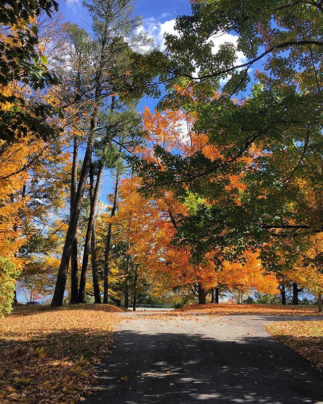 My fav season 🍁 #autumn #ny