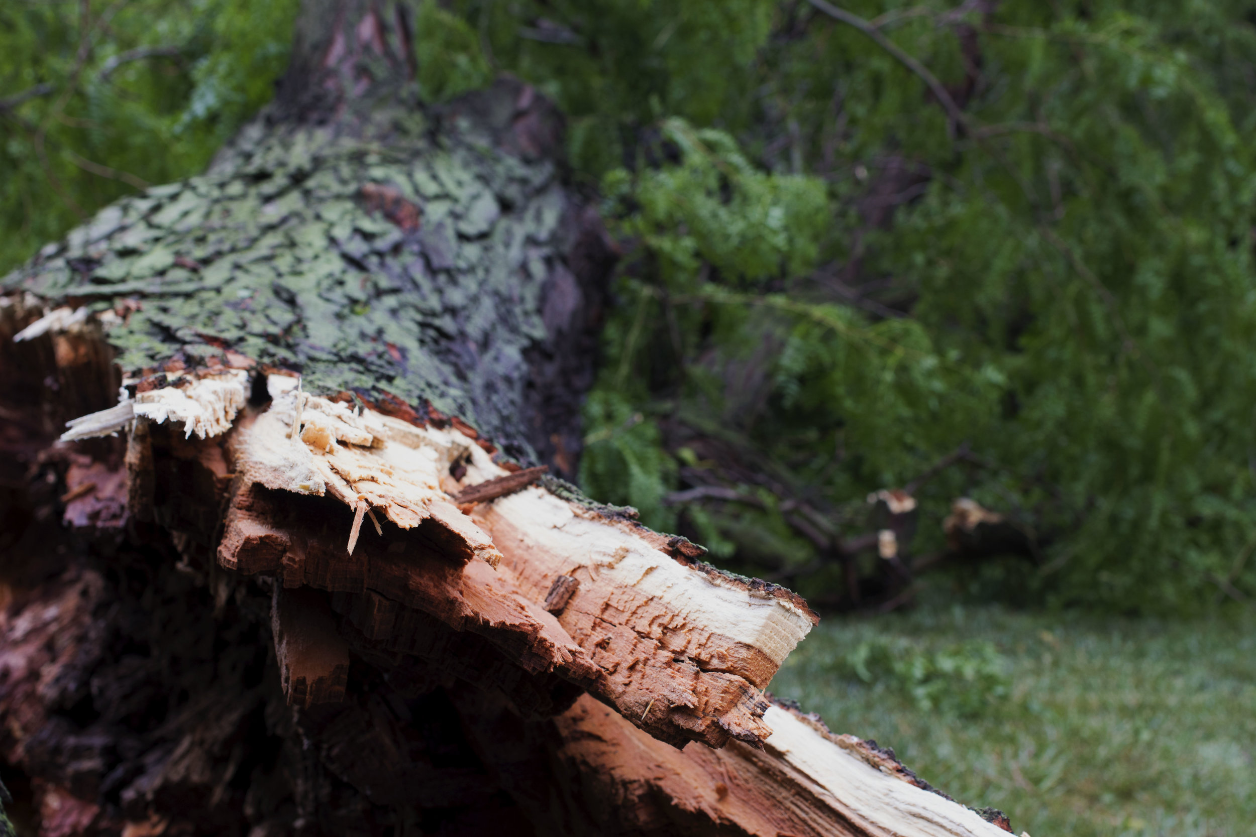Severe storm splintered trees across campus. PC: Kayla Potts
